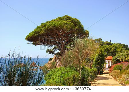 Park with lots of different green plants, pine, stone pine, palm trees, flowering shrubs, flowers, gazebo with white columns, blue sea along the cliff above the sea