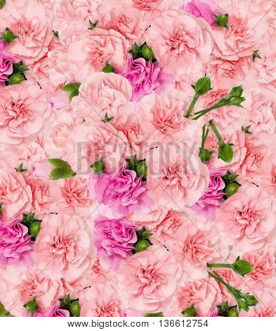 Abstract background of flowers. Close up. Pink flowers.