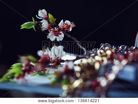 tenred Flowering pink branch in black background