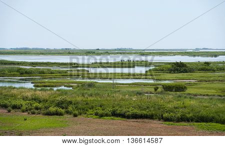 Vast green wetlands spread out in southern Jersey