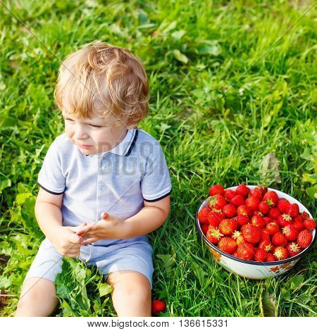 Happy blond little toddler kid boy picking and eating strawberries on organic pick a berry farm in summer, on warm sunny day. Harvest fields. Healthy food for children. Gardening and farming concept