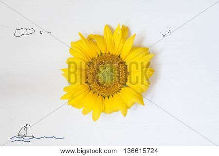 sunflower on a white wooden background - summer idea