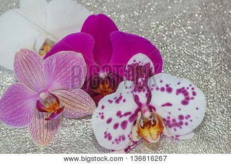 Different Phalaenopsis Flowers