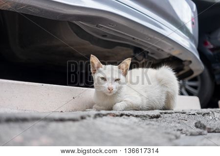 White stray cat sitting behind a car in the car park