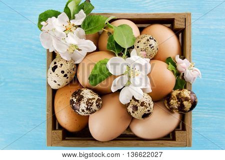 Chicken and quail eggs in the box on blue wooden background.