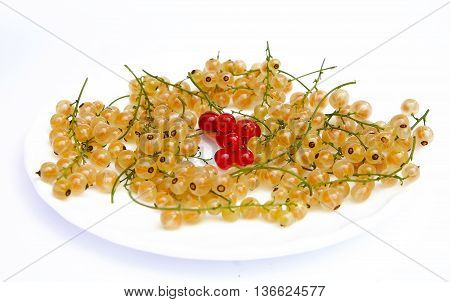 beautiful and sweet white currants on a white background photo for mickro-stock