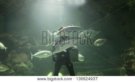 Scuba Diver Feed Fish In Aquarium