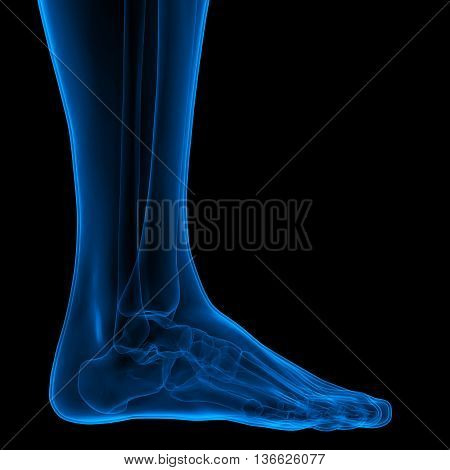 3D Illustration of Human Body Bone Joint Pains (Foot joints and Bones)