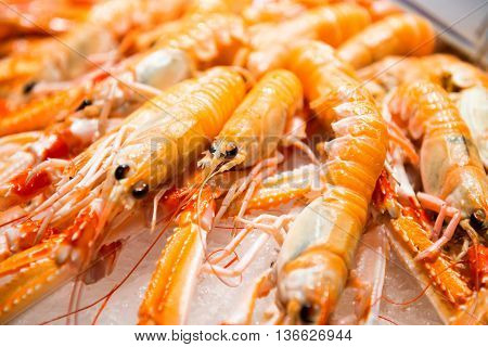 Pile Of Red Fresh Shrimps