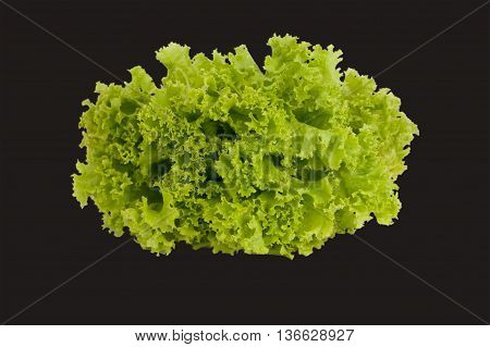 fresh green lettuce isolated on a black background