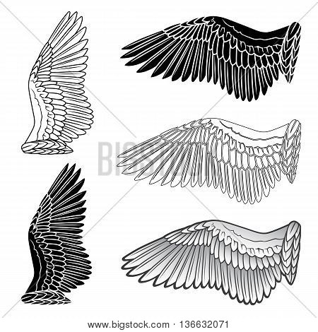 Pigeon wings and dove linear silhouette isolated on white background vector illustration