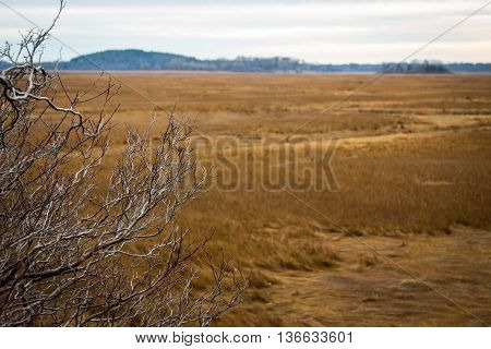 A bare tree in winter standing watch over the salt marsh along the Ipswich River in Ipswich, MA.