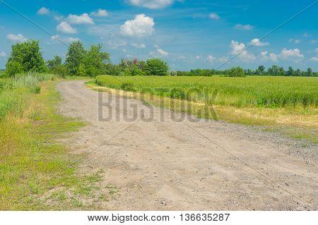 Country macadam road on the edge of wheat field in rural area Ukraine