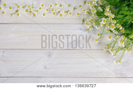 Daisies spread over a white wooden table.