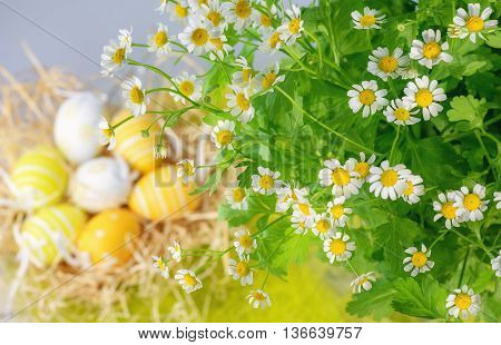 Daisies and Easter eggs in the background.