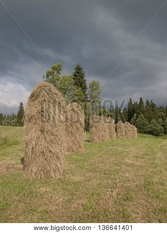 Picture of natural seasoning of hay in Poland