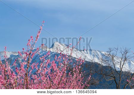 Mountains in the Pyrenees with snow and flowers