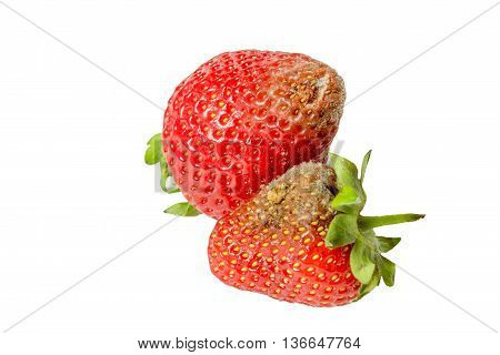Rotten strawberries isolated on white background closeup