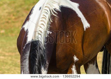 Horse neck mange brown white animal in field