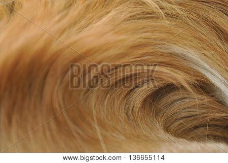 Pelaje de perro en forma de ola.