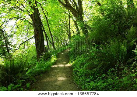 a picture of an exterior Pacific Northwest forest hiking trail in summer