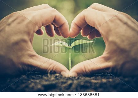 Hand forming a heart shape with a small plant / Love and protect nature