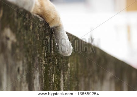 foot of a sleeping cat on concrete wall