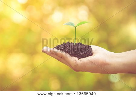 Nurturing baby plant / protect nature / planting tree