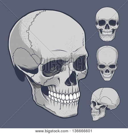 Skull vector stock in different  position and side