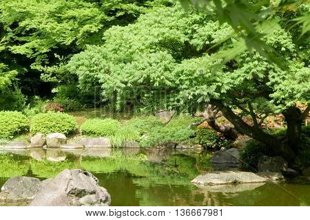 Plants, Water Pond With Reflection In The Japanese Zen Garden