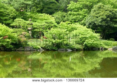 Green Trees, Pond With Reflection In Japanese Zen Garden