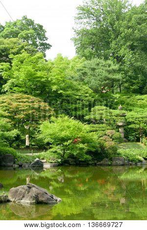 Green Plants, Pond With Reflection In Japanese Zen Garden