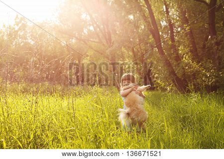 Little Girl and Spitz. Girl hugging a pet standing in a meadow.