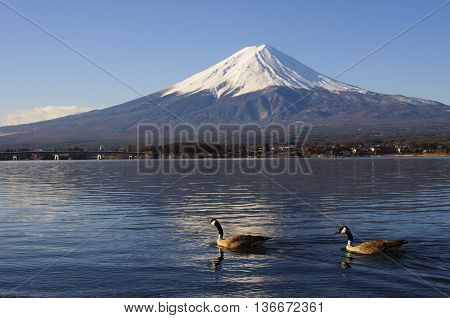 Geese And Mt Fuji View From Lake Kawaguchiko