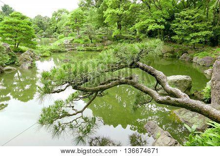 Pine Trees, Bridge With Reflection In Japanese Zen Garden