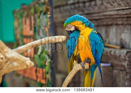 Parrot ara is sitting on the branch