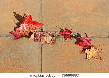 Fallen red leaves on the floor. Autumn motive.