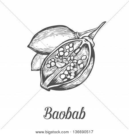 Baobab Fruit, Nut Engraving Vintage Set. Hand Drawn Sketch Vector Illustration. Black Baobab On Whit