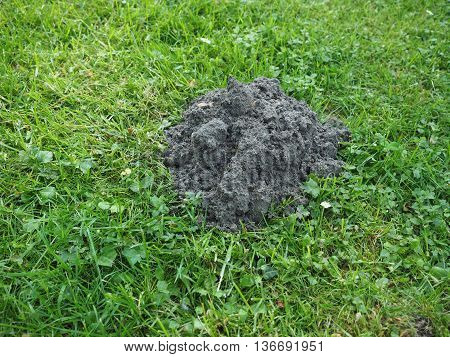 Mole Holes In A Lawn