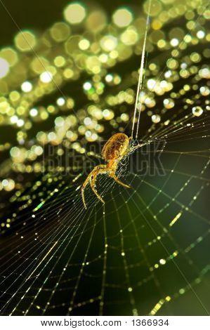 Christmas Web
