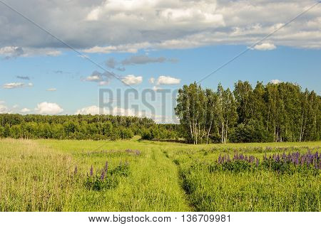 Footpath in deep grass on forest glade sunny summer day