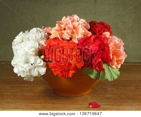 Pelargonium. Still life. Bouquet of flowers home on a wooden table in an terracotta pot.
