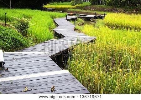 The Boardwalks it's in rice field ,nature