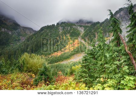 Early fall colors on the misty Wonderland Trail, in Mount Rainier National Park, Washington.