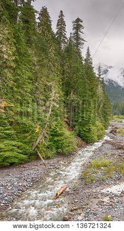 Fryingpan Creek on a misty autumn day, near Summerland, in Mount Rainier National Park, Washington.