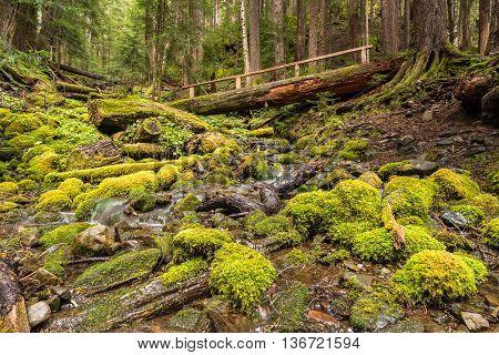 Log bridge over Rocky Creek on the High Divide/Seven Lakes Trail in National Park, near Port Angeles, Washington.