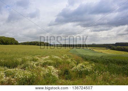 Farmland Wildflowers In Summer