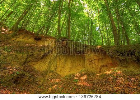 Sandy scarp inside beech forest. Poland, Holy Cross Mountains.