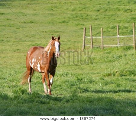 Painted Horse In Meadow