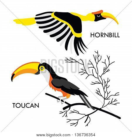 Cartoon african wild birds. Vector african birds made in flat style. Isolated wild african Toucan and Hornbill. Cartoon wild birds african background. Isolated vector Toucan. Isolated vector Hornbill.